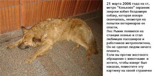 охранник избил собаку